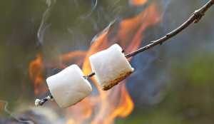 Marshmallows braden